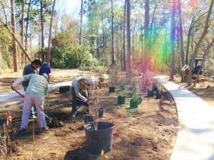 A Rainbow Effect when planting the New Aromi Azalea Garden! Come and See the Rainbow of Colors  - Blooms Guaranteed soon!