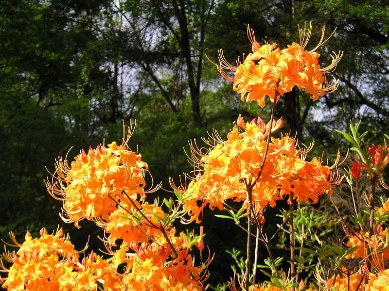 Tipsy Tangerine Aromi Slider