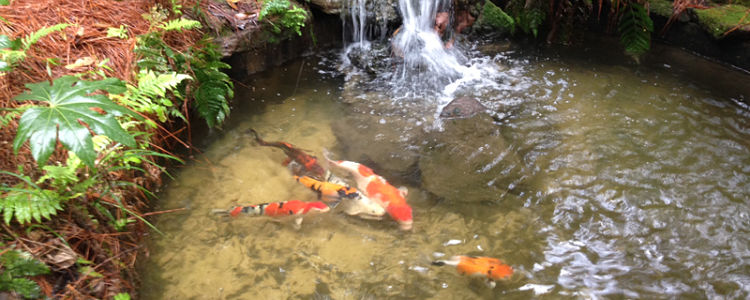 Koi 750x300 opt for post