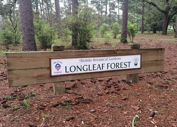 Longleaf Forest slider