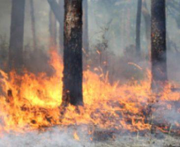 Longleaf Forest Burn for Post