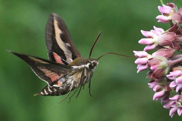 Butterfly Garden slider