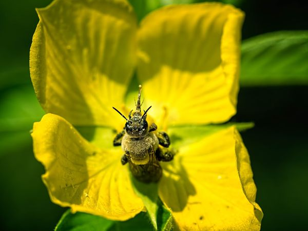 Butterfly Gardener slider