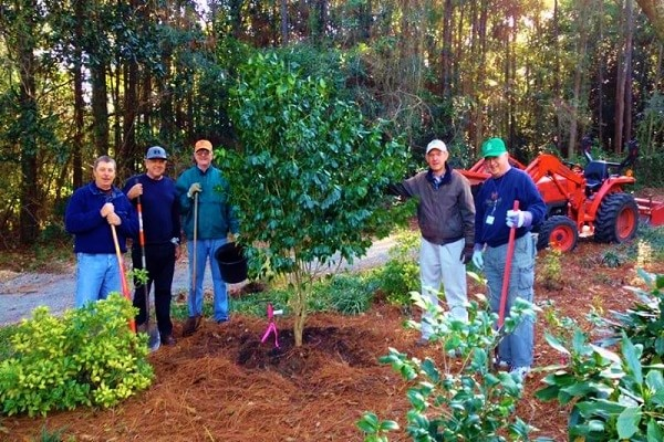 WEB-volunteers-camellias-600-x400-min