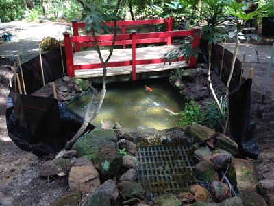 Koi protected after clearing debris. July 7th 2015