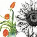 Botanical Art III – Watercolor