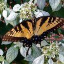 Pollinator Celebration