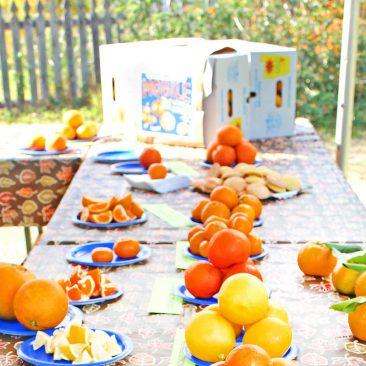 Citrus-Day-3-HR-crop