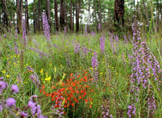 wildflowers-postsize