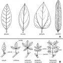 Plant ID Class
