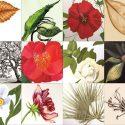 The Pursuit of Flora – Art Exhibit