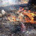 Longleaf Burn