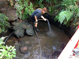 Kirsten cleaning the koi pond in 2014
