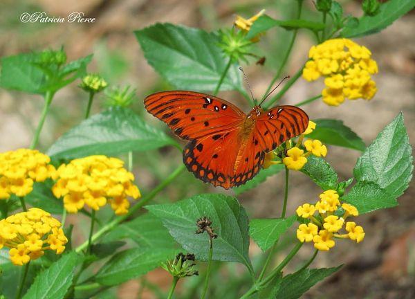 Feeding Butterflies post