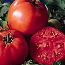 Tomato Super Tasty web 500_opt