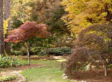 MBG Japanese Maple Garden. Copyright Elizabeth Gelineau